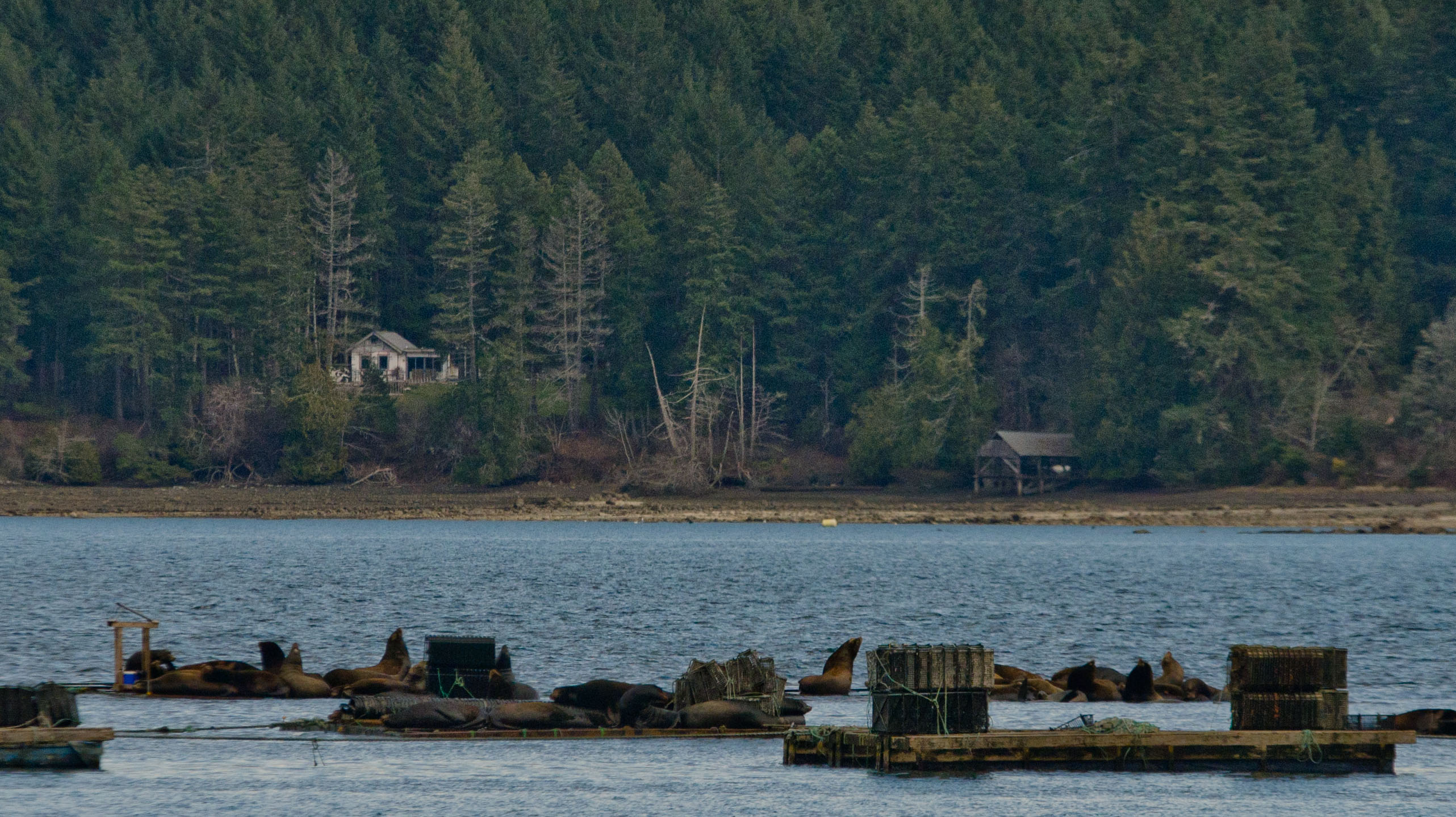 Norovirus outbreak associated to raw BC oysters