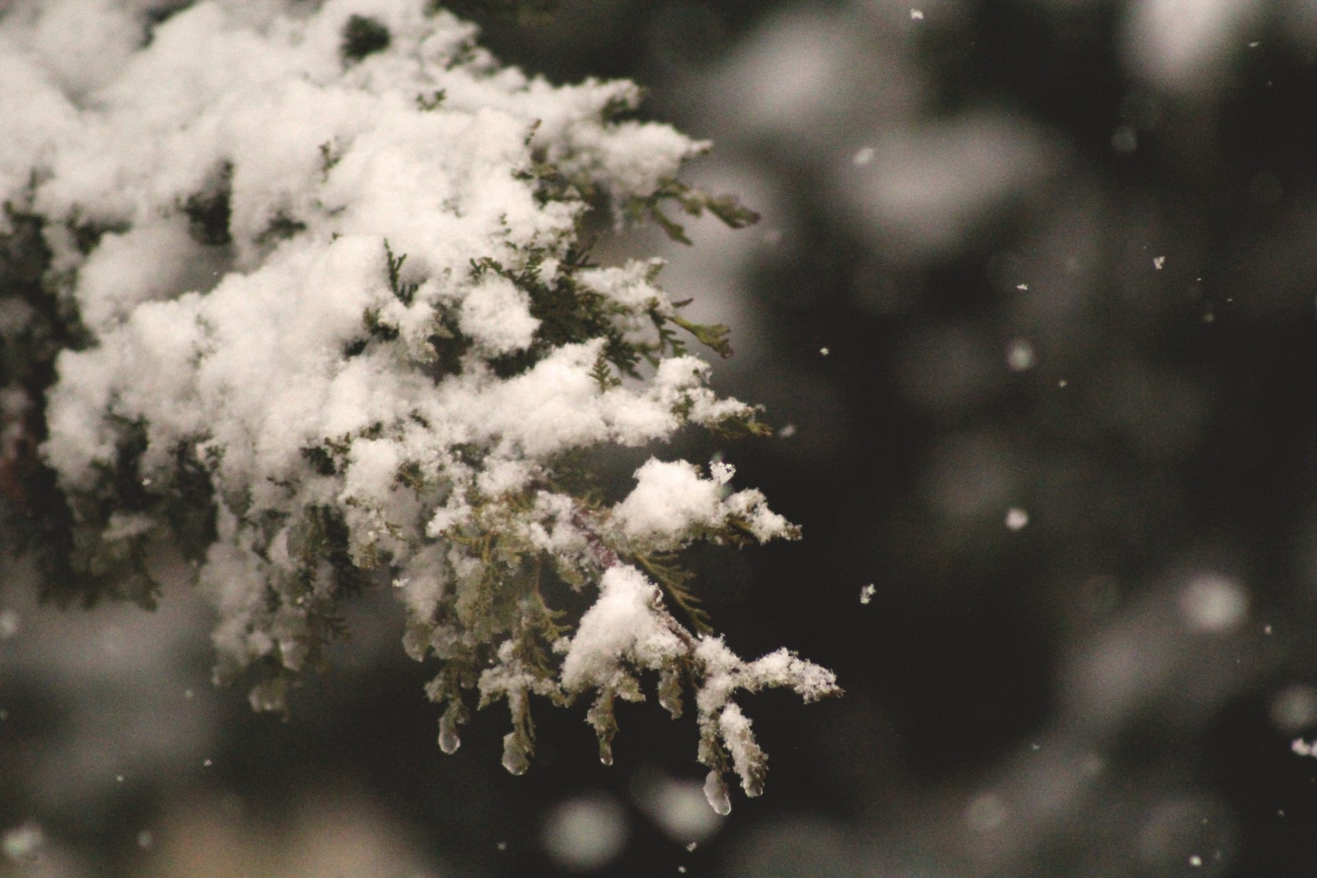 Chicago To Get 'Wintry Mix,' Not Downy Snow, On Christmas